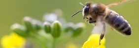 """""""Es geht ums Überleben"""": 12.8. Biopestizide - die Revolution auf dem Acker?"""