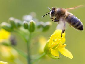 Biopestizide richten sich meist nur gegen Schädlinge und verschonen andere Tiere.