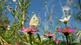 Temperaturen auf Zickzackkurs: Sommer schaltet einen Gang runter