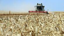Der Börsen-Tag: Bauernverband beklagt regionale Ernte-Totalausfälle