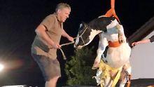 Aufregung in Morsbach: Feuerwehr holt Kuh vom Dach