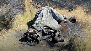Dutzende Dickhäuter abgeschlachtet: Wilderer richten Elefanten-Massaker an
