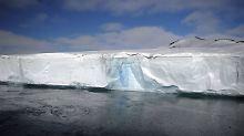 Verstecktes Ökosystem freigelegt: Riesiger Eisberg driftet in wärmere Gewässer