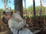 Lust auf Lappland (3): Knutschen mit Huskys