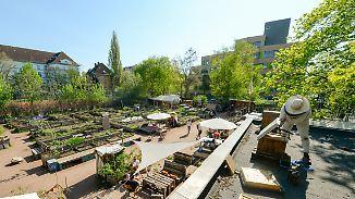 n-tv Ratgeber: Stadtgärten bringen Erholung und Nachhaltigkeit