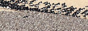Großes Treffen am Meerbusen: Vögel überwintern in Norfolk
