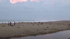 Kampf gegen Plastikmüll und Fischerei: Hunderte Schildkröten brüten an mexikanischem Strand