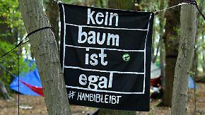 Ecosia schickt Angebot an RWE: Öko-Suchmaschine will Hambacher Forst kaufen