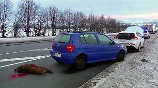 Häufigste Crash-Ursache: Sachsen-Anhalt testet neue Technik gegen Wildunfälle