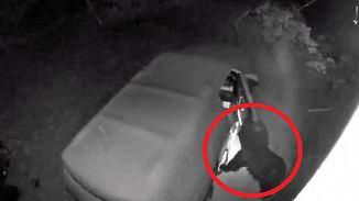 Kaum zu glauben, aber wahr: Bär beweist Fingerspitzengefühl an Familienauto