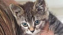 Tier auf Straße festgeklebt: Autofahrer rettet gequälte Katze vor dem Tod