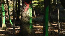 Am Hambacher Forst bauen Umweltschützer ein neues Protestcamp auf.