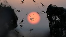 Schaurig schön: Wenn Spinnennetze alles überdecken