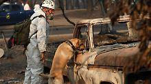 Feuerkatastrophe in Kalifornien: Zahl der Vermissten steigt auf über 1000