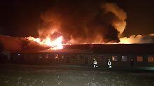 Flammeninferno in Scheune: 1700 Schweine sterben bei Großbrand