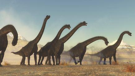 Giganten der Urzeit: Warum wurden Dinosaurier so groß? - n