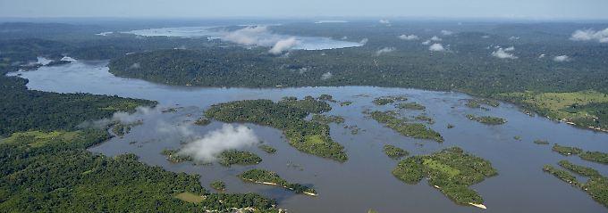 """""""Wegen seiner untrennbaren semantischen Beziehung zum Amazonas-Regenwald"""" sollte die Domain """".amazon"""" kein Monopol eines Unternehmens sein, argumentierte das brasilianische Außenministerium."""