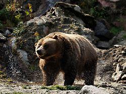 Zelten in Nordwest-Kanada: Grizzlybär tötet schlafenden Camper