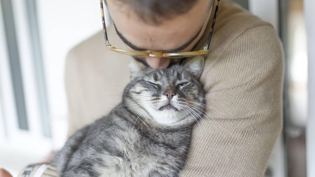 Forscher finden Mittel gegen Katzenallergie