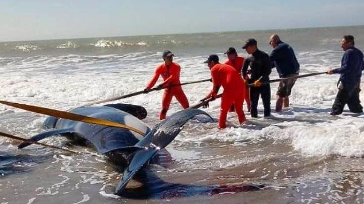 Killerwale stranden an Atlantikküste