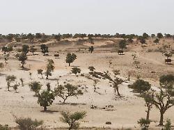 Afrika pflanzt ein Weltwunder im Sahel