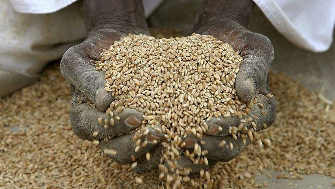 Dramatisch für die ärmeren Länder: Lebensmittelpreise explodieren weltweit