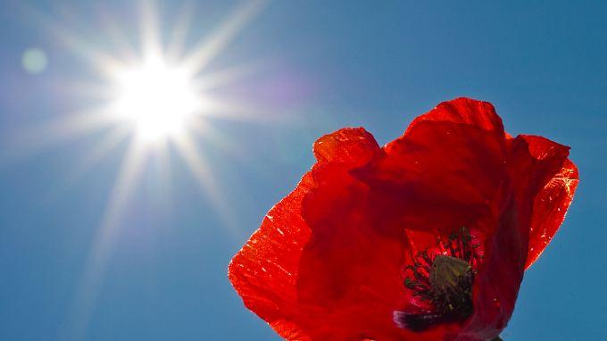 Mit Hilfe der UVB-Strahlen im Sonnenlicht kann im menschlichen Körper Vitamin D produziert werden.