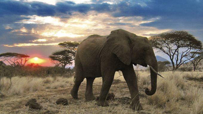 """Gefährdetes Paradies: """"Serengeti"""" zeigt prächtige Natur"""