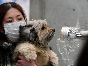 In der Region Fukushima werden alle auf erhöhte Strahlenwerte überprüft.