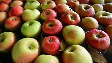 Äpfel senken sogar im getrocknetem Zustand den Cholesterinspiegel.