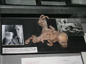 Verstümmelte Fehlgeburt eines Hundewelpen aus der Todeszone von Tschernobyl im Tschernobyl-Museum in Kiew.
