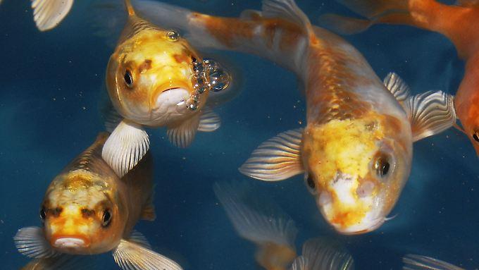 Im MDax-Bassin schwimmen noch interessante Dinge.