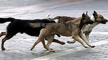 Brutaler Kehraus für Fußball-WM: Russen töten Straßenhunde