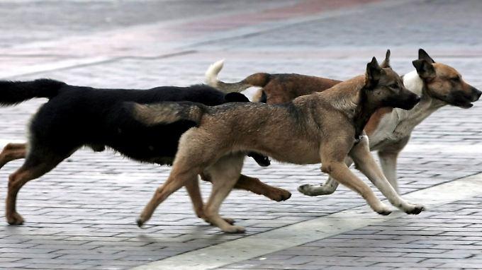 Straßenhunde sind in Russland ein fester Bestandteil des lokalen Kolorits.