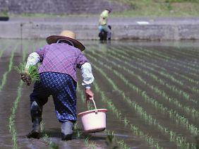 Radioaktiv verseuchter Niederschlag könnte jede Ernte zunichte machen.