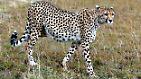 """""""Wie im Paradies"""": Serengeti - Die endlose Ebene"""