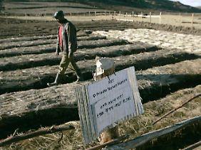 """Ein Bauer geht über seinen Acker in Asagir, Äthiopien.  Alemneh Abera  ist der erste in der Region, der den Terrassenbau ausprobiert hat. Von der Hilfsorganisation """"Menschen für Menschen"""" des Schauspielers Karlheinz Böhm gab es die nötige Starthilfe."""