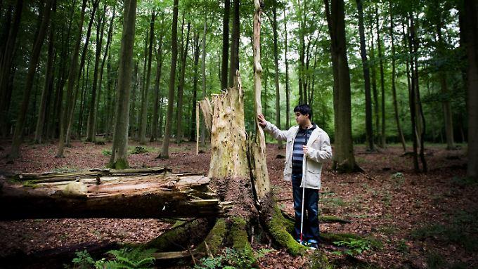 Mustafa Ilhan ertastet einen Baumstamm ...