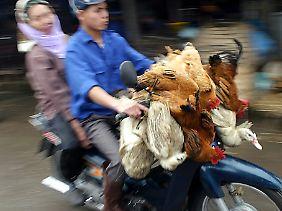 Händler bringen ihr Geflügel auf den Markt in Hanoi.