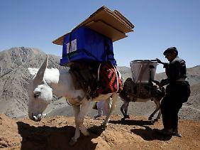 Esel als Wahlhelfer: Vor dem Urnengang transportieren die Tiere Wahlutensiilien in schwer zugängliche Gebiete des Landes.