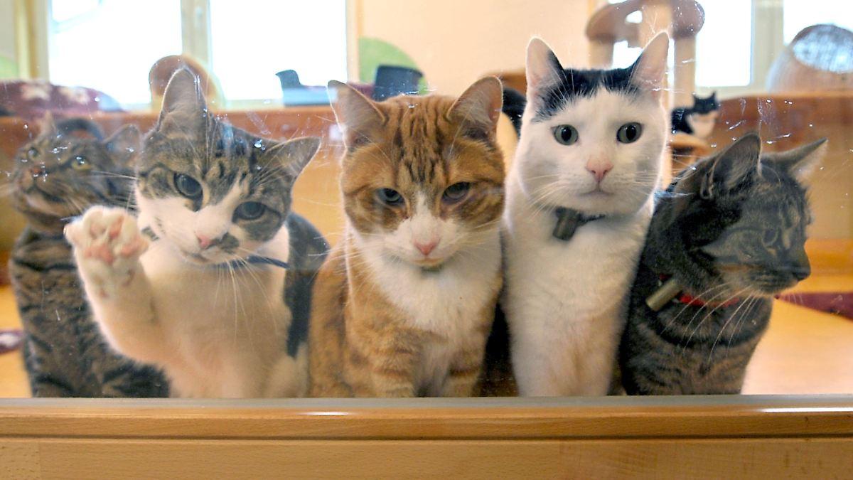 miau miau katzen vertreiben hausbesitzer n. Black Bedroom Furniture Sets. Home Design Ideas