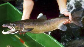 Wer nicht selber angeln will, findet im Kühlregal gute Alternativen.