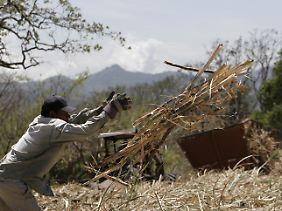In Nikaragua erntet ein Bauer das Zuckerrohr von seinem Feld.
