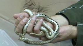 Flughafenkontrolle versagt: Männer schmuggeln fast 600 Reptilien