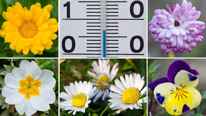 Frühling im Januar: Mildes Wetter irritiert Mensch und Natur