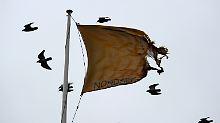 Viele Vögel sind auf der Suche nach neuen Lebensräumen.