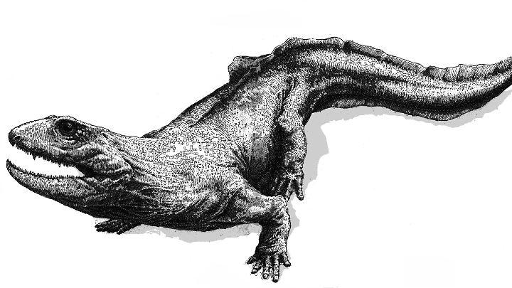 Zwischen einem und zwei Metern lang schätzen Wissenschaftler die Größe eines amphibischen Tieres, dessen ungefähr 360 Millionen Jahre alten Fossilien jetzt gefunden wurden.