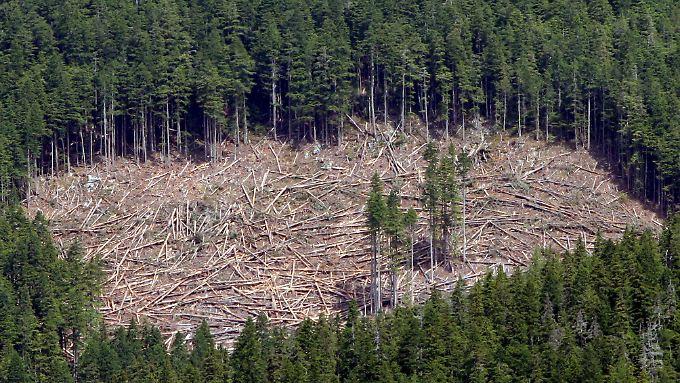 Entstehende Freiflächen sorgen für mehr CO2.