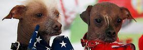 Die Strähne macht den Unterschied: Mugly, der hässlichste Hund der Welt