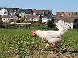 Hühneraugen haben einen ganz eigenen Blick auf die Dinge.